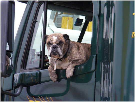 Trucking-with-pets